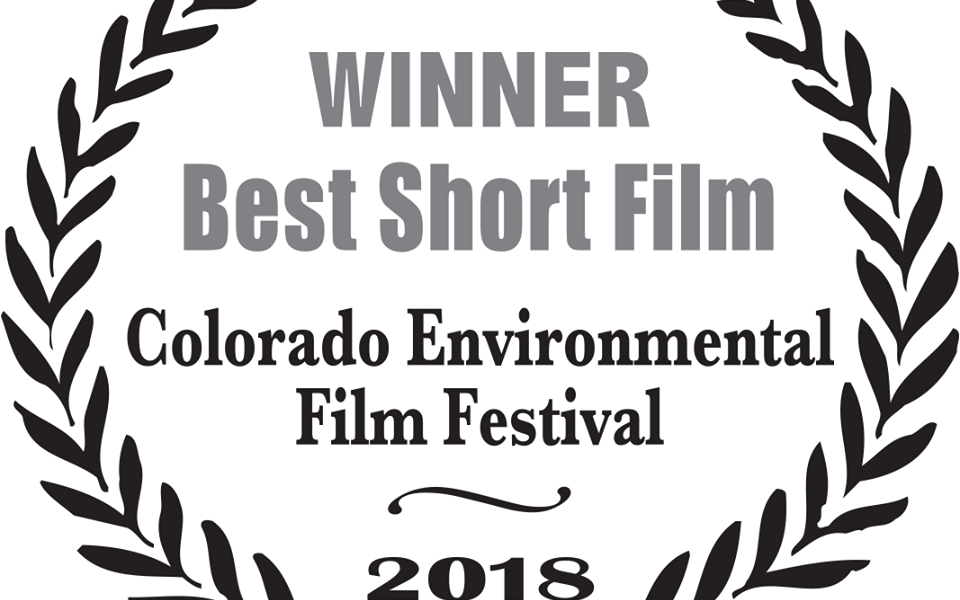 Award for Documentary 'Salmon Forest'